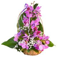 Leuke mand vol bandung orchideeën, gipskruid en groen